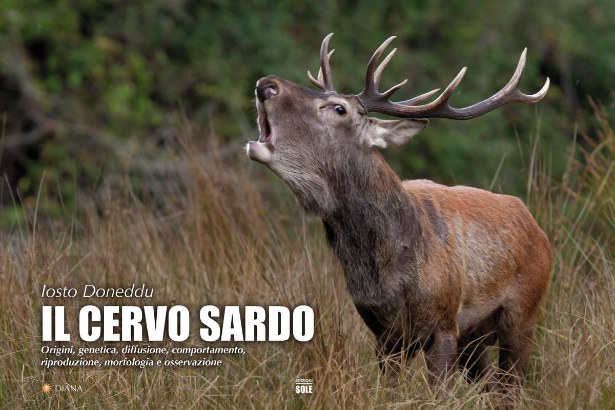 Cervo sardo immagini