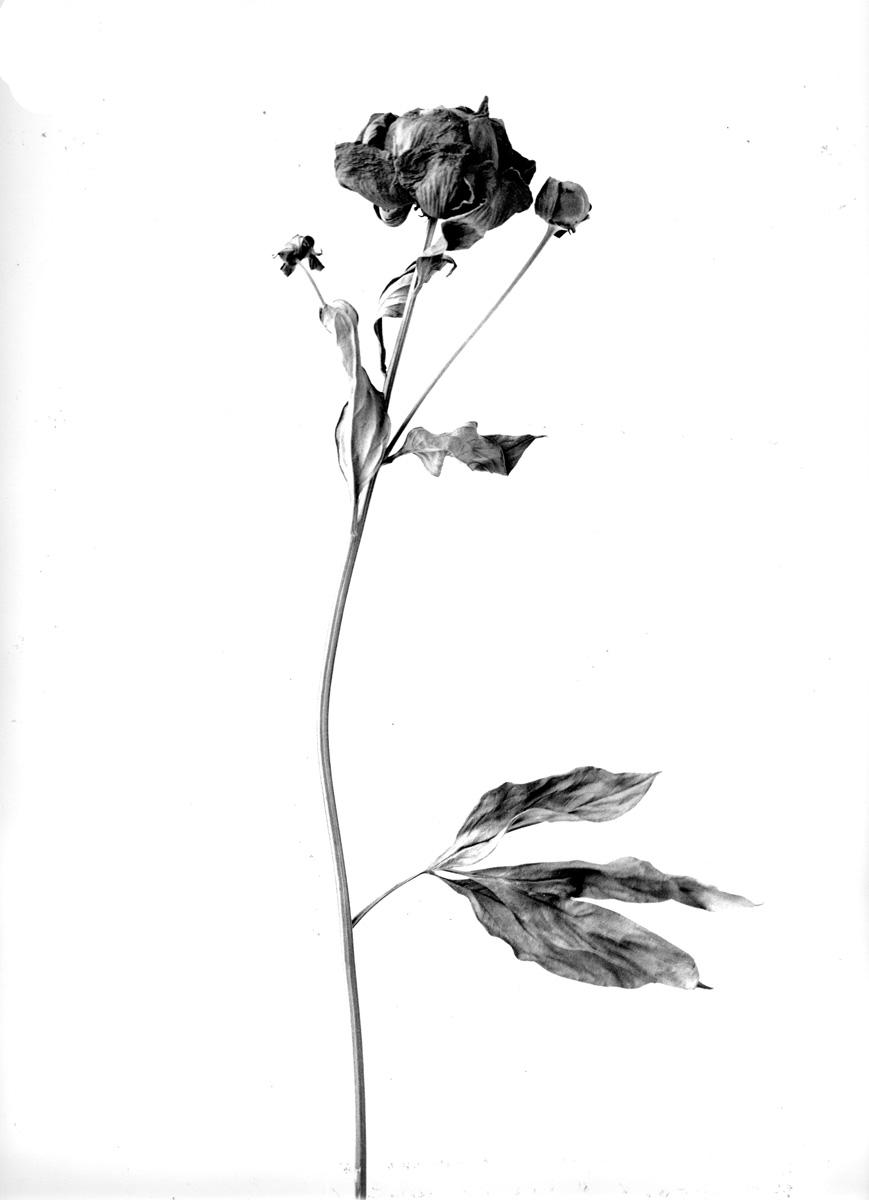 fiori secchi 1