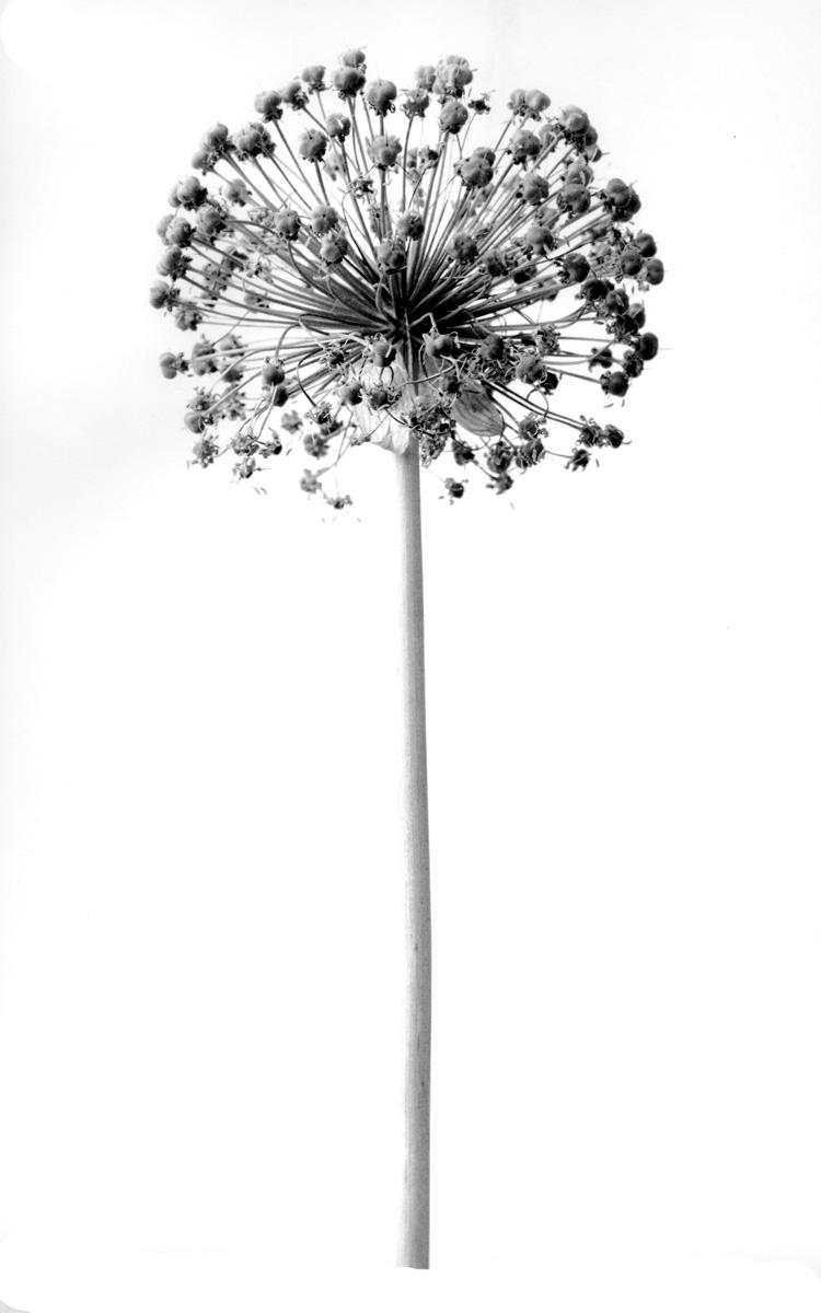 fiori secchi fiori secchi 5
