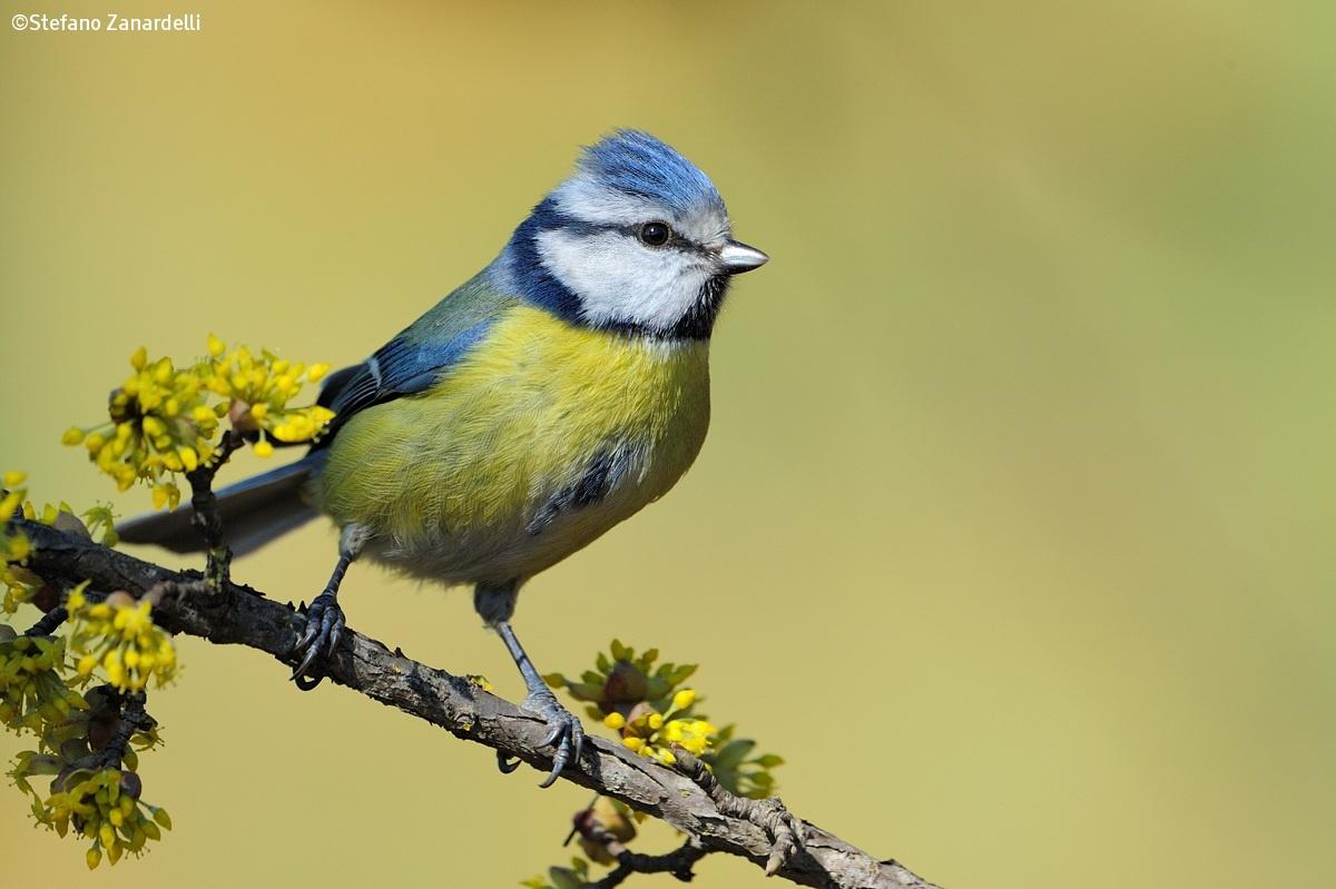Uccelli by zana08 juzaphoto - Primavera uccelli primavera colorazione pagine ...